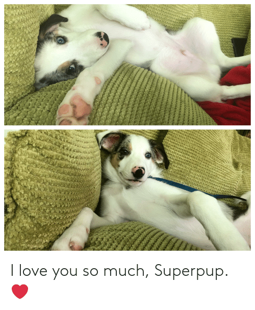 I Love You: I love you so much, Superpup. ❤️