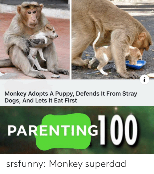 Dogs, Tumblr, and Blog: i  Monkey Adopts A Puppy, Defends It From Stray  Dogs, And Lets It Eat First  PARENTING srsfunny:  Monkey superdad