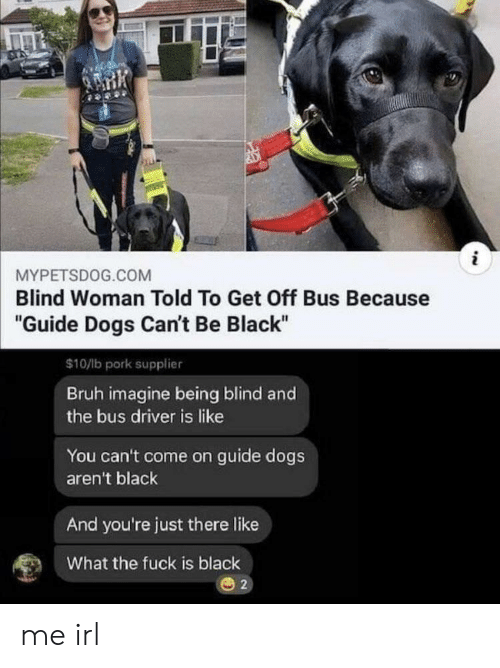 """Bruh, Dogs, and Black: i  MYPETSDOG.COM  Blind Woman Told To Get Off Bus Because  """"Guide Dogs Can't Be Black""""  $10/lb pork supplier  Bruh imagine being blind and  the bus driver is like  You can't come on guide dogs  aren't black  And you're just there like  What the fuck is black  2 me irl"""