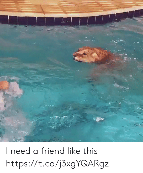 Funny, Friend, and This: I need a friend like this https://t.co/j3xgYQARgz