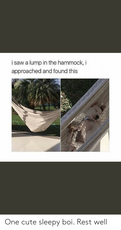 Cute, Saw, and Hammock: i saw a lump in the hammock, i  approached and found this One cute sleepy boi. Rest well