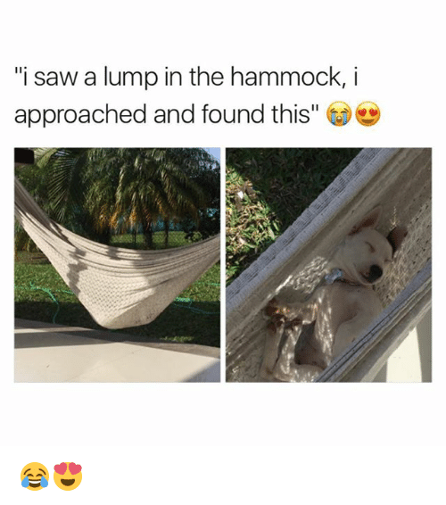 """—˜: """"i saw a lump in the hammock,i  approached and found this"""" 😂😍"""