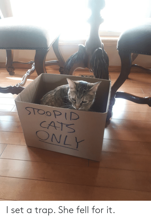 trap: I set a trap. She fell for it.