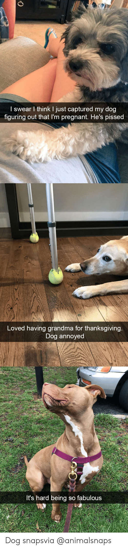 Grandma, Target, and Thanksgiving: I swear l think I just captured my dog  figuring out that I'm preanant, He's pissed   Loved having grandma for thanksgiving  Dog annoyed   t's hard being so fabulous Dog snapsvia @animalsnaps​