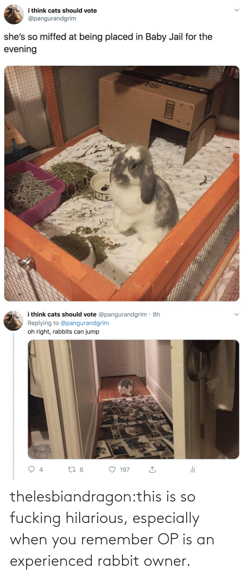 Jail: i think cats should vote  @pangurandgrim  she's so miffed at being placed in Baby Jail for the  evening   i think cats should vote @pangurandgrim· 8h  Replying to @pangurandgrim  jump  oh right, rabbits can  li  27 6  197  4 thelesbiandragon:this is so fucking hilarious, especially when you remember OP is an experienced rabbit owner.