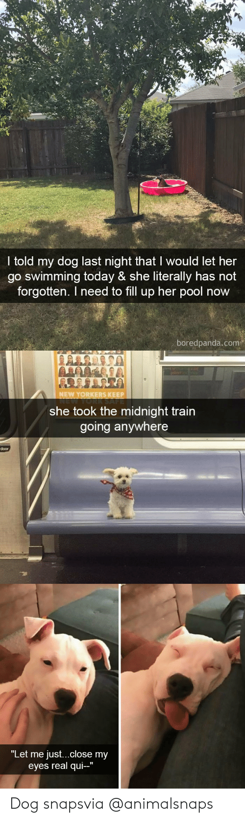 "fill up: I told my dog last night that I would let her  go swimming today & she literally has not  forgotten. I need to fill up her pool now  boredpanda.com   NEW YORKERS KEEP  she took the midnight train  going anywhere  door   ""Let me just...close my  eyes real qui-"" Dog snapsvia @animalsnaps"