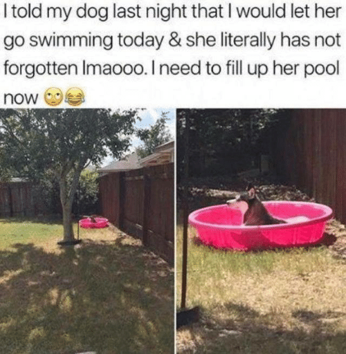 fill up: I told my dog last night that I would let her  go swimming today & she literally has not  forgotten Imaooo. I need to fill up her pool  now