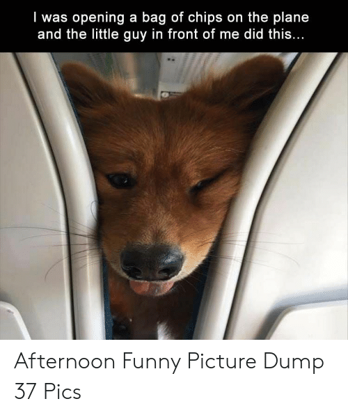 Funny, Chips, and Pics: I was opening a bag of chips on the plane  and the little guy in front of me did this Afternoon Funny Picture Dump 37 Pics