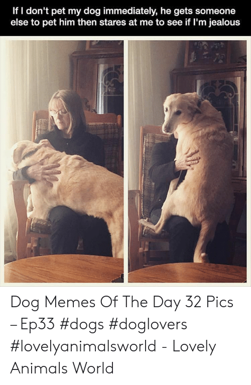 Animals, Dogs, and Jealous: If I don't pet my dog immediately, he gets someone  else to pet him then stares at me to see if I'm jealous Dog Memes Of The Day 32 Pics – Ep33 #dogs #doglovers #lovelyanimalsworld - Lovely Animals World