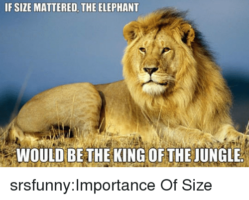 Tumblr, Blog, and Elephant: IF SIZE MATTERED, THE ELEPHANT  94  WOULD BE THE KING OF THE JUNGLE srsfunny:Importance Of Size