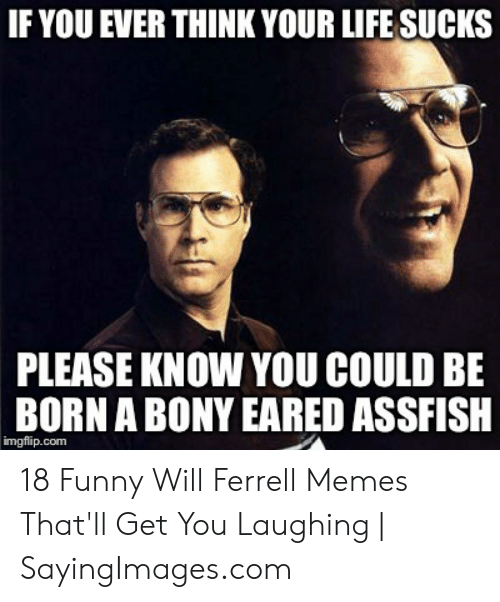 will ferrell memes: IF YOU EVER THINK YOUR LIFE SUCKS  PLEASE KNOW YOU COULD BE  BORN A BONY EARED ASSFISH  imgflip.com 18 Funny Will Ferrell Memes That'll Get You Laughing | SayingImages.com