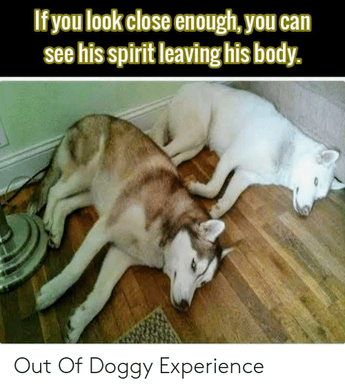 Spirit, Experience, and Can: If you look close enough, you can  see his spirit leaving his body. Out Of Doggy Experience