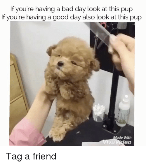🐣 25+ Best Memes About Have-A-Good-Day | Have-A-Good-Day Memes