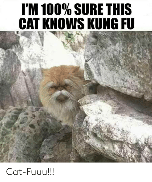 kung fu: I'M 100% SURE THIS  CAT KNOWS KUNG FU Cat-Fuuu!!!