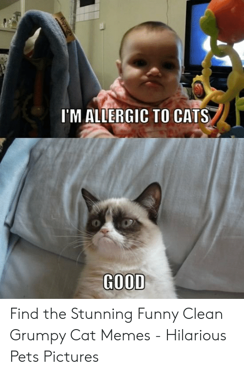 🐣 25+ Best Memes About Funny Clean Grumpy Cat | Funny Clean