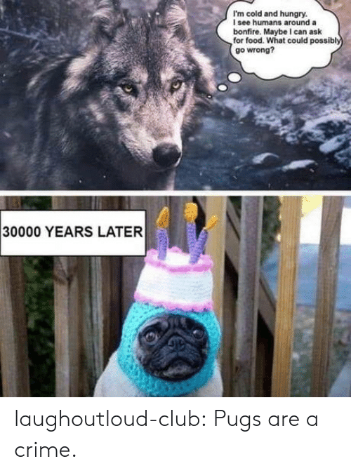 Club, Crime, and Food: I'm cold and hungry.  I see humans around a  bonfire. Maybe I can ask  for food. What could possibl  go wrong?  30000 YEARS LATER laughoutloud-club:  Pugs are a crime.