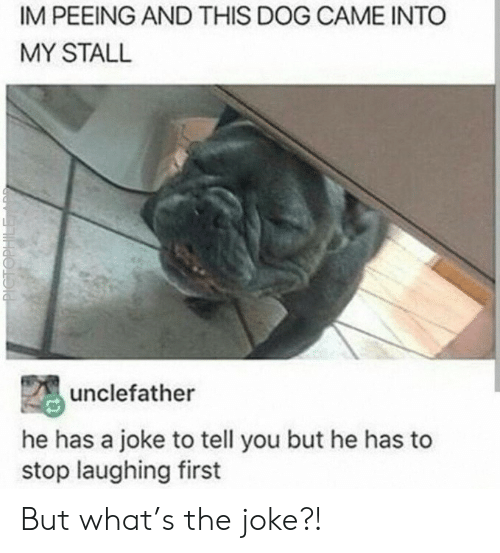 Dog, First, and You: IM PEEING AND THIS DOG CAME INTO  MY STALL  unclefather  he has a joke to tell you but he has to  stop laughing first  PICTOPHILE But what's the joke?!