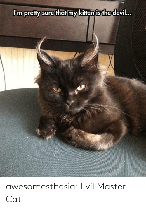 Tumblr, Devil, and Blog: I'm pretty sure that my kitten is the devil... awesomesthesia:  Evil Master Cat