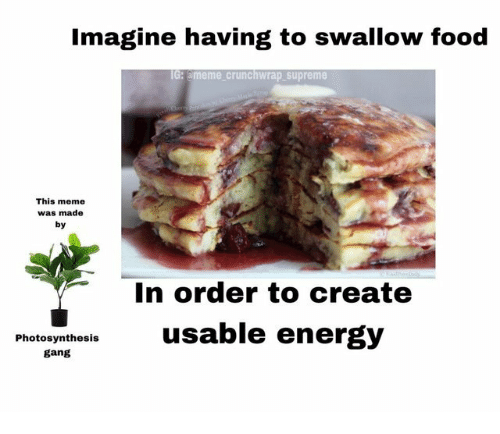 Food, Meme, and Supreme: Imagine having to swallow food  G: ameme crunchwrap supreme  This meme  was made  by  In order to create  Photoyntheslsusable energ)y  gang