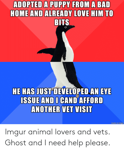 Imgur: Imgur animal lovers and vets. Ghost and I need help please.