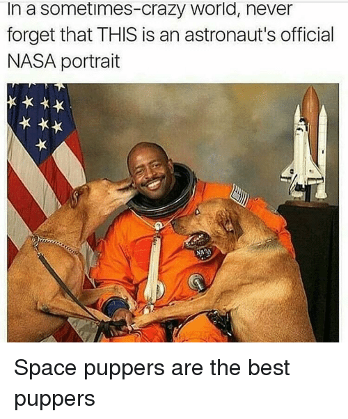 Crazy, Nasa, and Best: In a sometimes-crazy world, never  forget that THIS is an astronaut's official  NASA portrait Space puppers are the best puppers