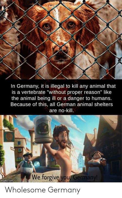 "Reddit, Animal, and Germany: In Germany, it is illegal to kill any animal that  is a vertebrate ""without proper reason"" like  the animal being ill or a danger to humans.  Because of this, all German animal shelters  are no-kill.  We forgive you Germany!  imgflip.com Wholesome Germany"