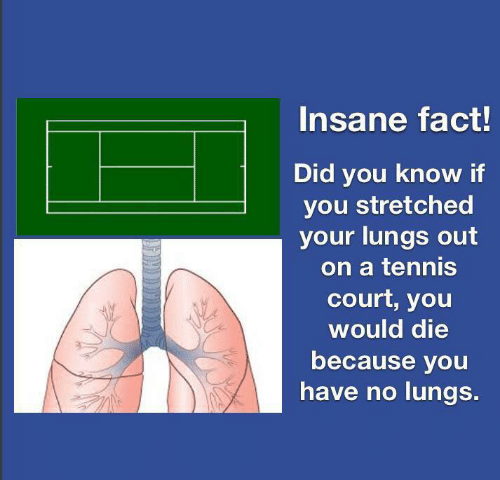 court: Insane fact!  Did you know if  you stretched  your lungs out  on a tennis  court, you  would die  because you  have no lungs.