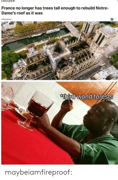 Tumblr, Blog, and France: INSIDER  France no longer has trees tall enough to rebuild Notre-  Dame's roof as it was  0  thira world forests maybeiamfireproof: