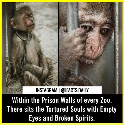 Instagram, Memes, and Prison: INSTAGRAM   @lFACTS.DAILY  Within the Prison Walls of every Zoo  There sits the Tortured Souls with Empty  Eyes and Broken Spirits.