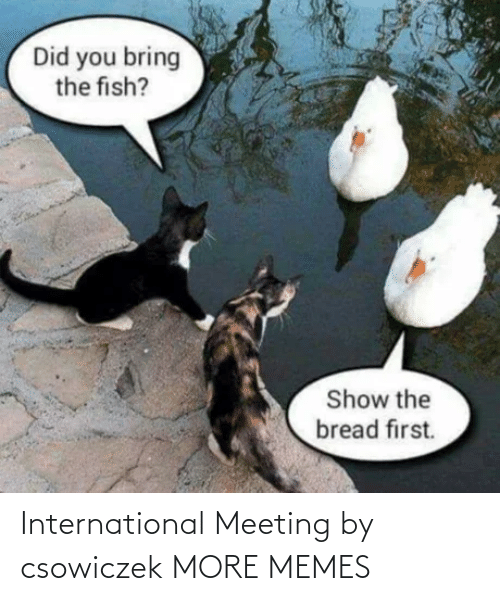 meeting: International Meeting by csowiczek MORE MEMES