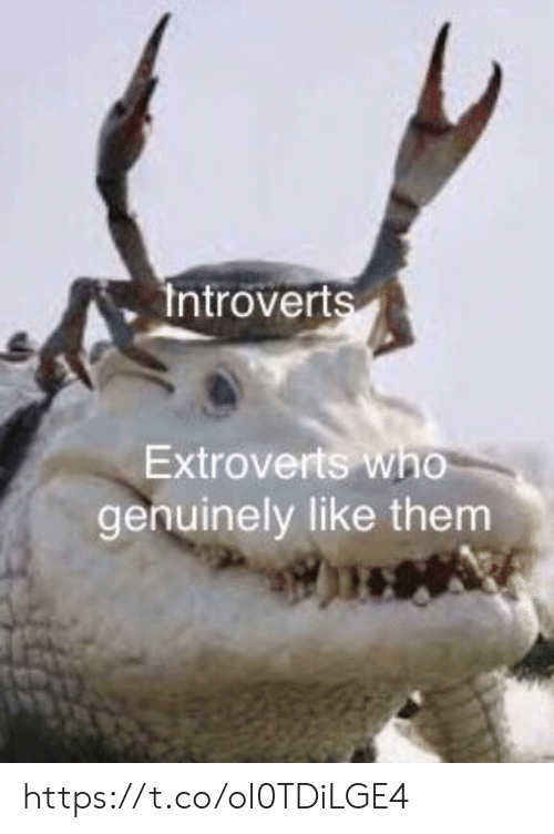Memes, 🤖, and Who: Introverts  Extroverts who  genuinely like them https://t.co/oI0TDiLGE4