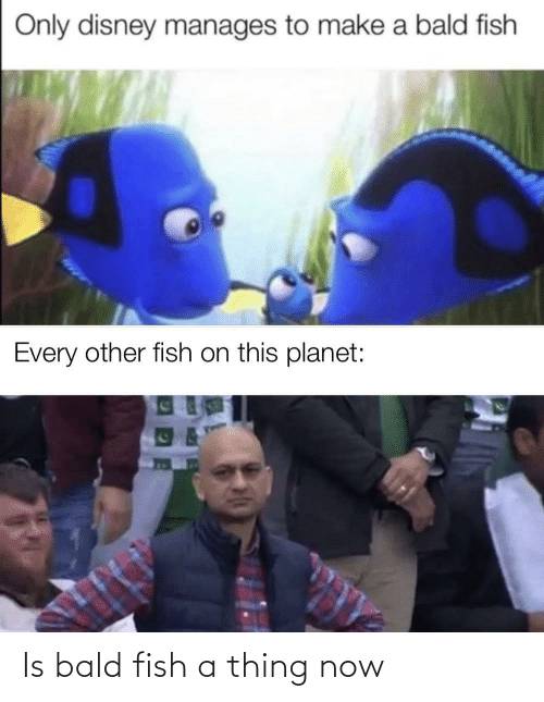 Fish: Is bald fish a thing now
