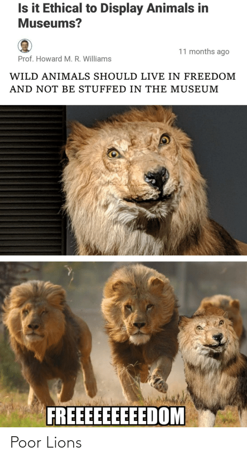 Freedom: Is it Ethical to Display Animals in  Museums?  11 months ago  Prof. Howard M. R. Williams  WILD ANIMALS SHOULD LIVE IN FREEDOM  AND NOT BE STUFFED IN THE MUSEUM  FREEEEEEEEEDOM Poor Lions