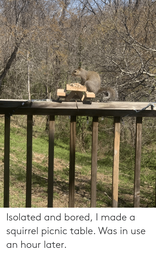 bored: Isolated and bored, I made a squirrel picnic table. Was in use an hour later.
