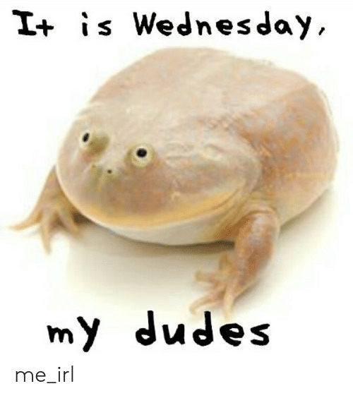 Wednesday, Irl, and Me IRL: It is Wednesday,  my dudes me_irl