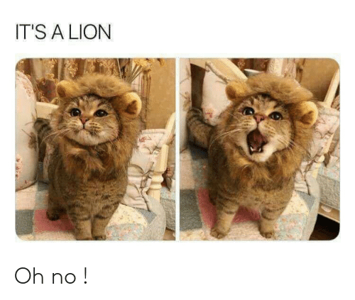 Lion, Oh No, and  No: IT'S A LION Oh no !