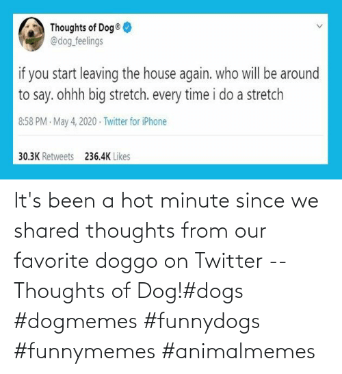 hot: It's been a hot minute since we shared thoughts from our favorite doggo on Twitter -- Thoughts of Dog!#dogs #dogmemes #funnydogs #funnymemes #animalmemes
