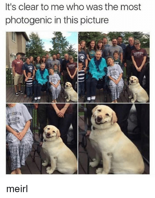MeIRL, Who, and Picture: It's clear to me who was the most  photogenic in this picture  ES meirl