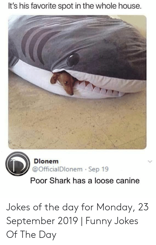 Funny, Funny Jokes, and Shark: It's his favorite spot in the whole house.  Dlonem  @OfficialDlonem Sep 19  Poor Shark has a loose canine Jokes of the day for Monday, 23 September 2019 | Funny Jokes Of The Day