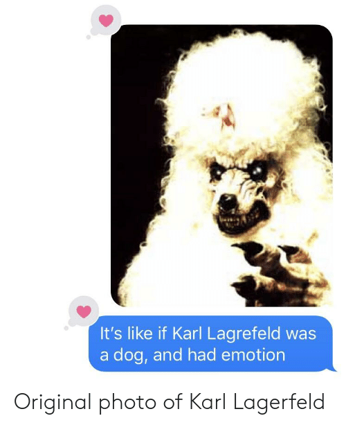 karl lagerfeld: It's like if Karl Lagrefeld was  a dog, and had emotion Original photo of Karl Lagerfeld
