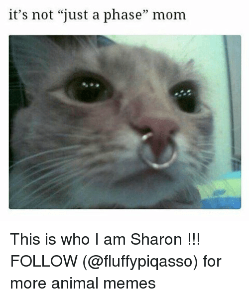 """Animation Meme: it's not """"just a phase"""" mom This is who I am Sharon !!! FOLLOW (@fluffypiqasso) for more animal memes"""