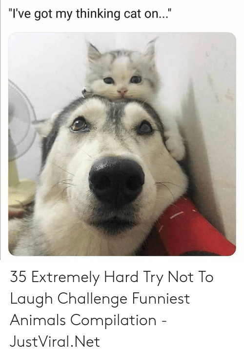 """funniest: """"I've got my thinking cat on..."""" 35 Extremely Hard Try Not To Laugh Challenge Funniest Animals Compilation - JustViral.Net"""