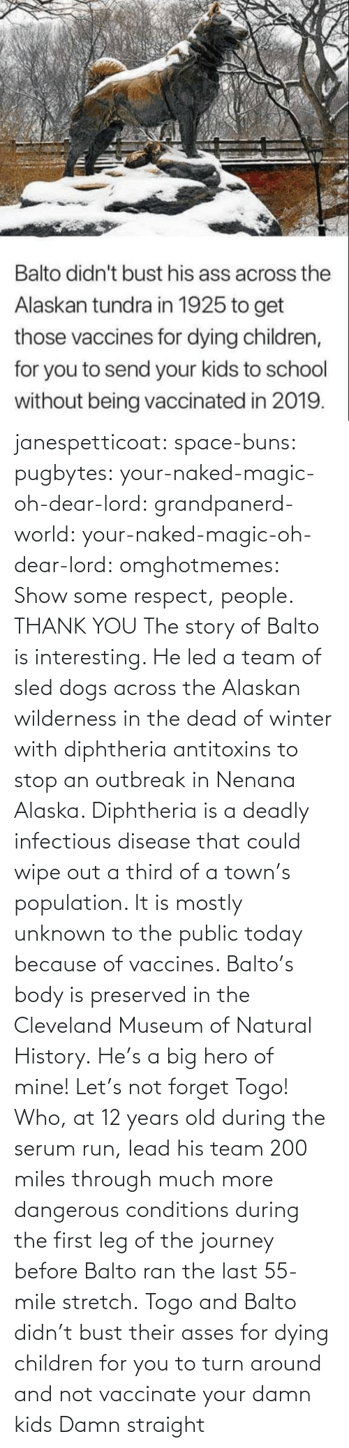 led: janespetticoat: space-buns:  pugbytes:   your-naked-magic-oh-dear-lord:  grandpanerd-world:   your-naked-magic-oh-dear-lord:  omghotmemes: Show some respect, people.  THANK YOU   The story of Balto is interesting. He led a team of sled dogs across the Alaskan wilderness in the dead of winter with diphtheria antitoxins to stop an outbreak in Nenana Alaska. Diphtheria is a deadly infectious disease that could wipe out a third of a town's population. It is mostly unknown to the public today because of vaccines. Balto's body is preserved in the Cleveland Museum of Natural History.   He's a big hero of mine!   Let's not forget Togo! Who, at 12 years old during the serum run, lead his team 200 miles through much more dangerous conditions during the first leg of the journey before Balto ran the last 55-mile stretch.   Togo and Balto didn't bust their asses for dying children for you to turn around and not vaccinate your damn kids    Damn straight