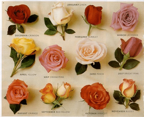 Orange, Pink, and April: JANUARY LINEN  MARCH LAVENDER  DECEMBER CRIMSON  FEBRUARY SCARLET  JULY BRIGHT PINK  JUNE PEACH  APRIL YELLOW  MAY CREAMIPINK  NOVEMBER RUSSET  SEPTEMBER REDIYELLOW  AUGUST ORANGE  OCTOBER APRICOT