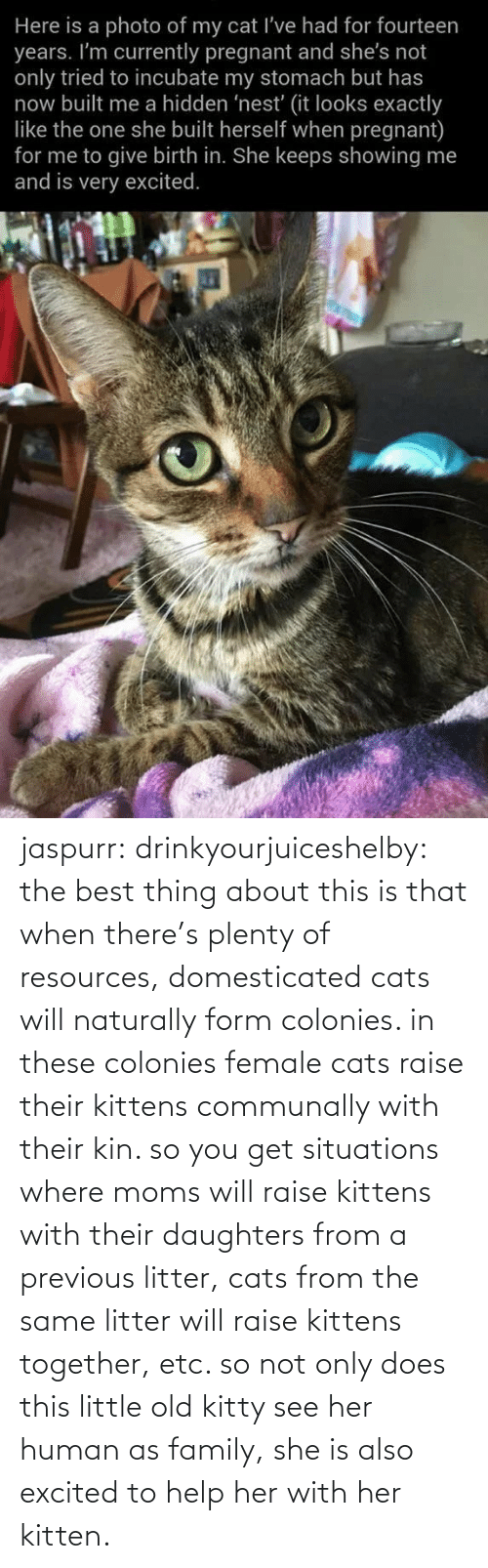 Help: jaspurr:  drinkyourjuiceshelby:    the best thing about this is that when there's plenty of resources, domesticated cats will naturally form colonies. in these colonies female cats raise their kittens communally with their kin. so you get situations where moms will raise kittens with their daughters from a previous litter, cats from the same litter will raise kittens together, etc. so not only does this little old kitty see her human as family, she is also excited to help her with her kitten.