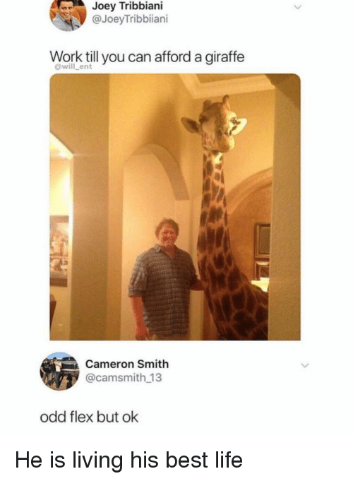 Flexing, Joey Tribbiani, and Life: Joey  Tribbiani  @JoeyTribbiiani  Work till you can afford a giraffe  @will ent  3  Cameron Smith  @camsmith 13  odd flex but ok He is living his best life