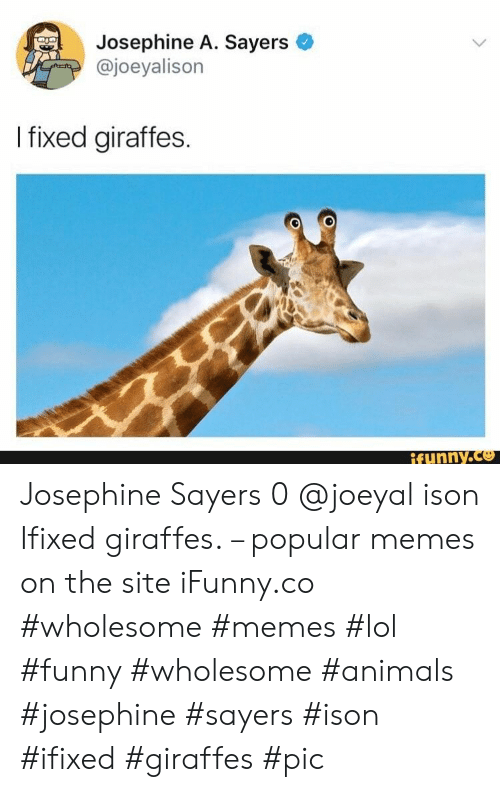 Animals, Funny, and Lol: Josephine A. Sayers  @joeyalison  I fixed giraffes.  ifunny.co Josephine Sayers 0 @joeyal ison Ifixed giraffes. – popular memes on the site iFunny.co #wholesome #memes #lol #funny #wholesome #animals #josephine #sayers #ison #ifixed #giraffes #pic