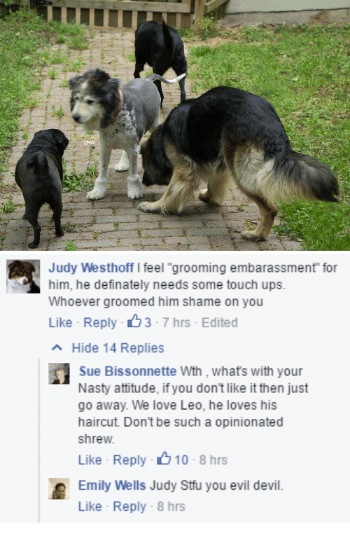 """Opinionated: Judy Westhoff I feel """"grooming embarassment for  him, he definately needs some touch ups.  Whoever groomed him shame on you  Like Reply 3-7 hrs Edited  Hide 14 Replies  Sue Bissonnette Wth , whats with your  Nasty attitude, if you don't like it then just  go away. We love Leo, he loves his  haircut. Don't be such a opinionated  shrew  Like Reply 10-8 hrs  Emily Well Judy Stuyou evil devil.  Like Reply-8 hrs"""