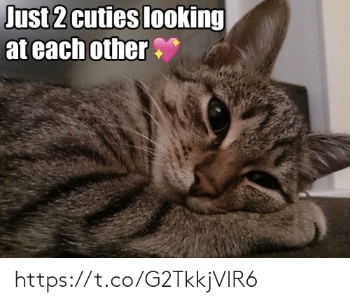 Memes, 🤖, and Looking: Just 2 cuties looking  at each other https://t.co/G2TkkjVlR6