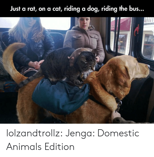 Riding A Dog: Just a rat, on a cat, riding a dog, riding the bus... lolzandtrollz:  Jenga: Domestic Animals Edition